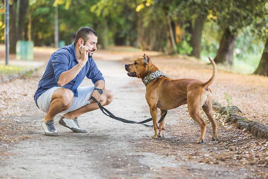 New Town Ordinance Creates Leash Law