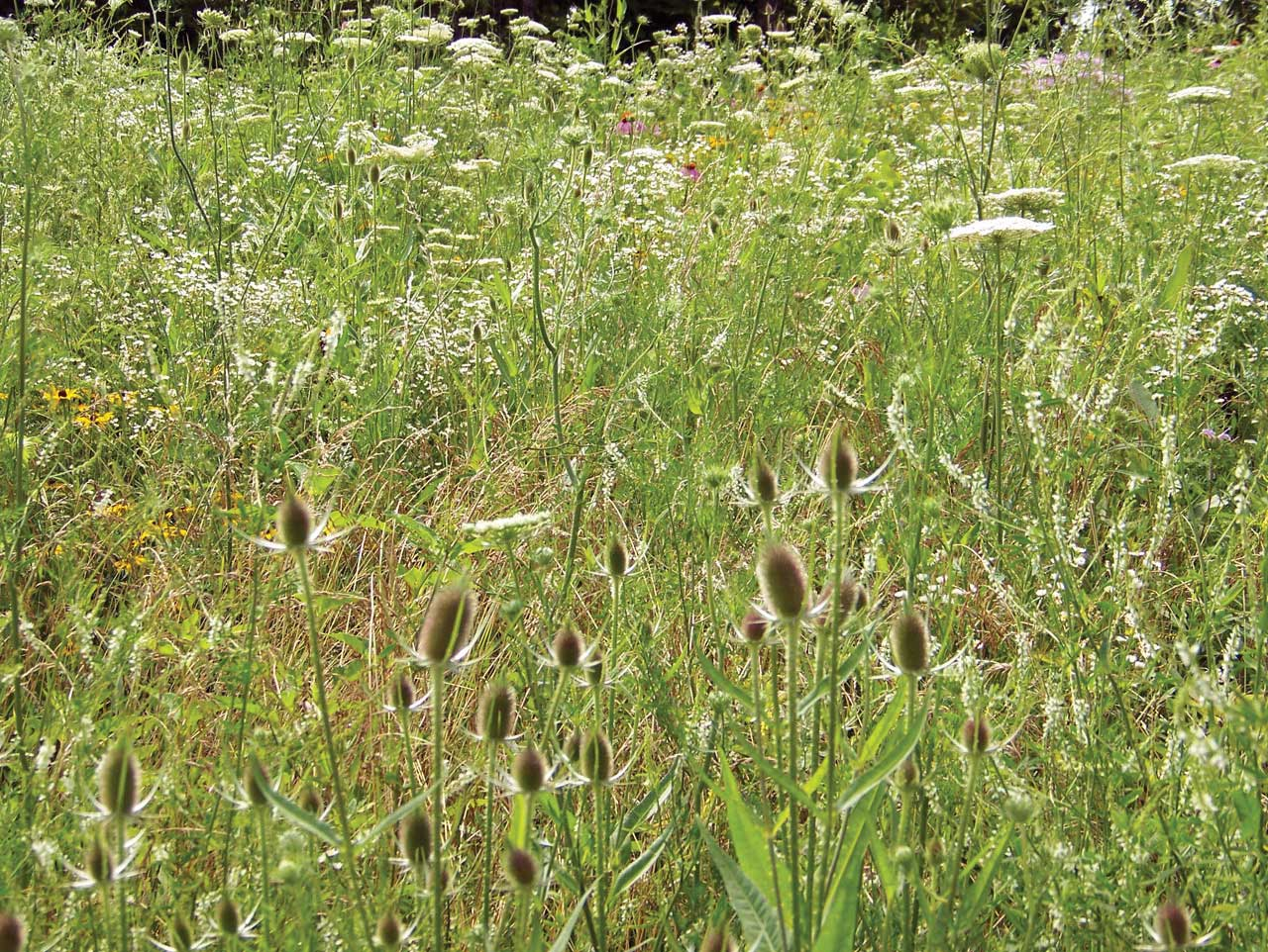 To Mow or Not to Mow – Selectmen Await Botanist's Report