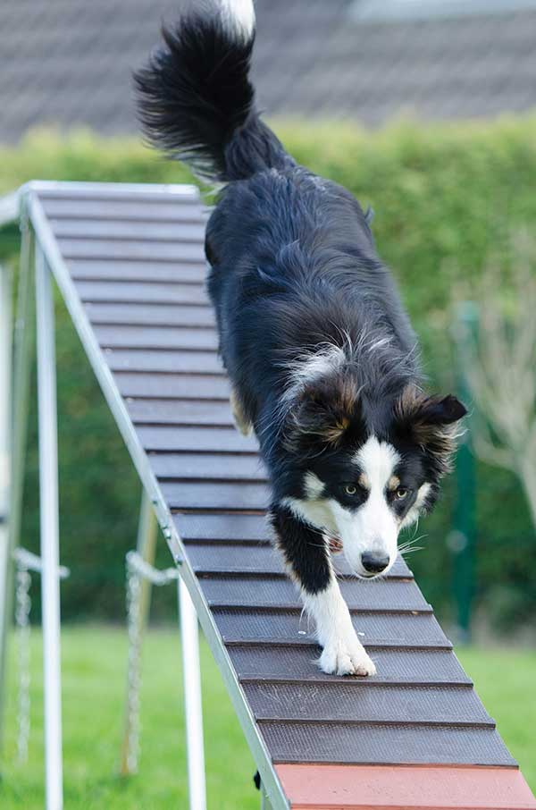 Bark Bytes… Why People Don't Train Their Dogs – and Why They Should